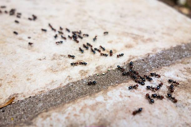 soñar con hormigas arrieras