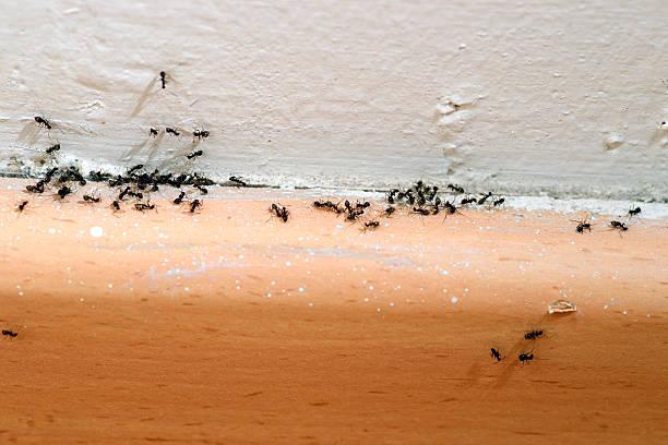 soñar con hormigas amarillas en la cama