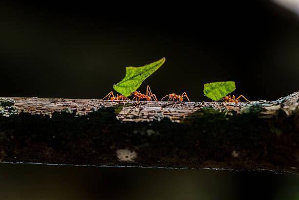 soñar con hormigas amarillas
