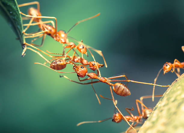 soñar con hormigas grandes