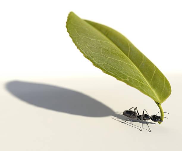 soñar con hormigas en la cama
