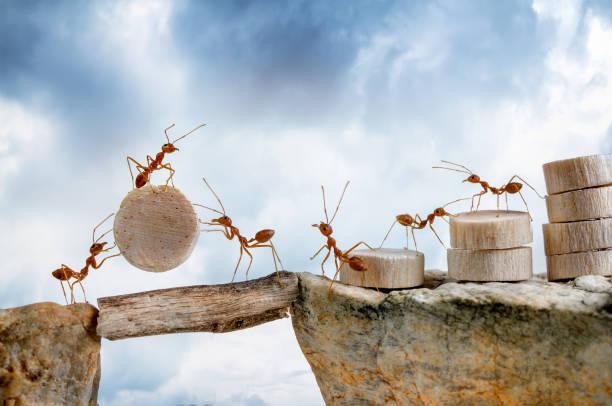 soñar con hormigas gigantes