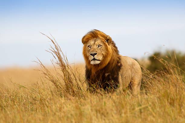 soñar con leones y tigres