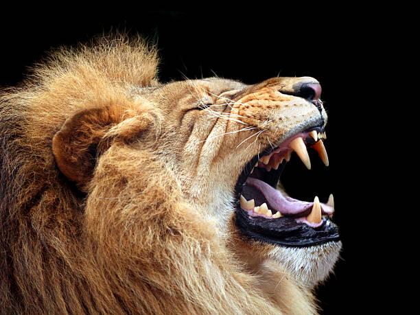 soñar con leones y leonas