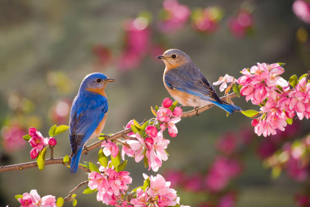 soñar con pájaros dentro de casa