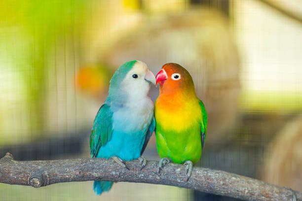 soñar con pájaros azules que significa