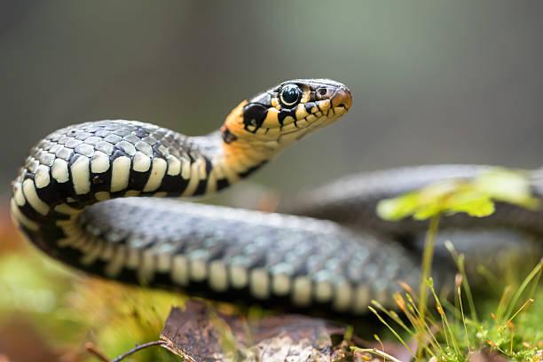 soñar con serpientes gigantes