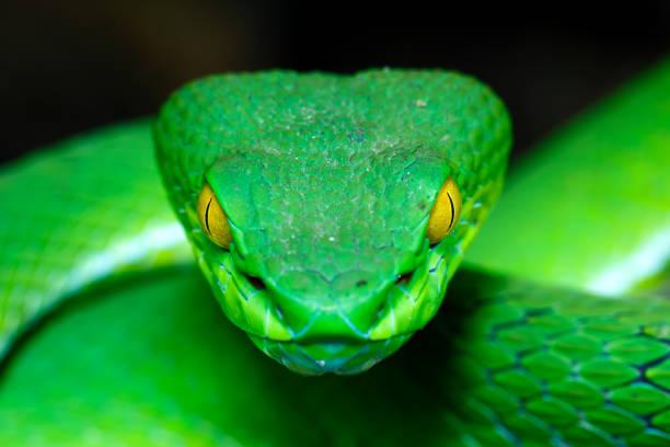 soñar con serpientes blancas