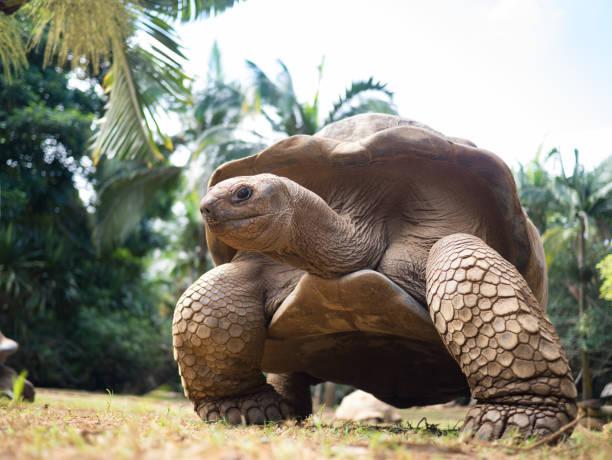 soñar con tortugas de tierra