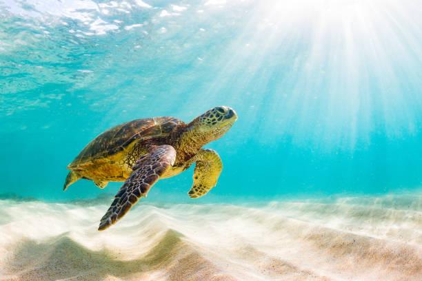 soñar con tortugas numero de suerte