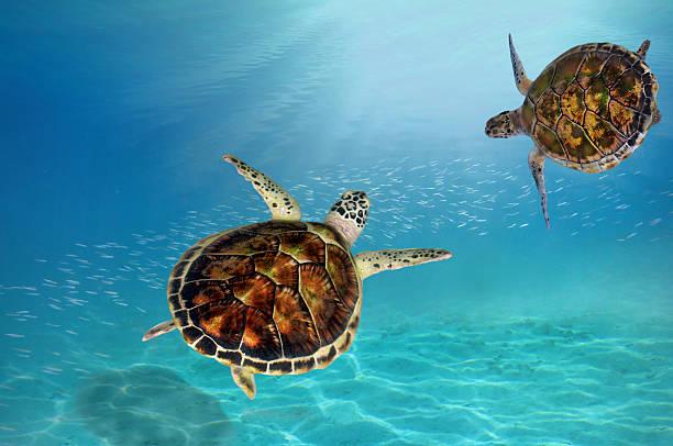 soñar con tortugas segun la biblia