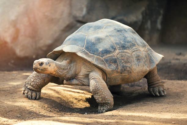 soñar con tortugas volteadas