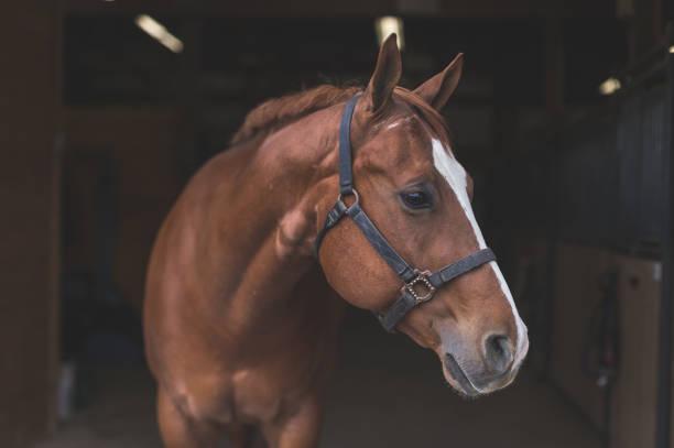 soñar con caballos grandes