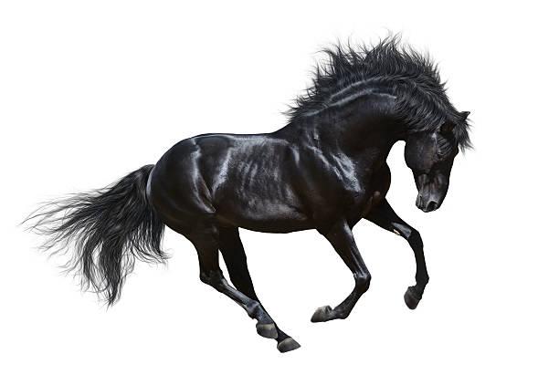 soñar con caballos marrones