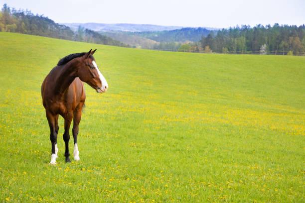 soñar con caballos y toros