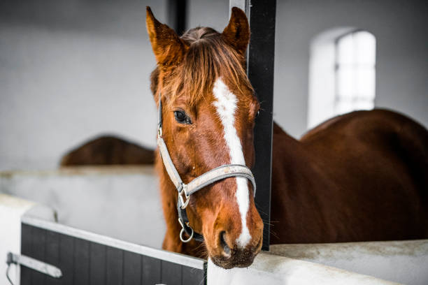 soñar con caballos que significa