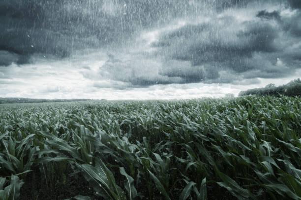 soñar con lluvia de noche