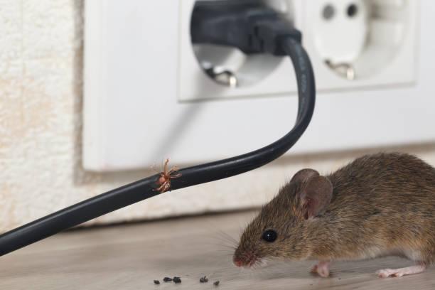soñar con ratones blancos