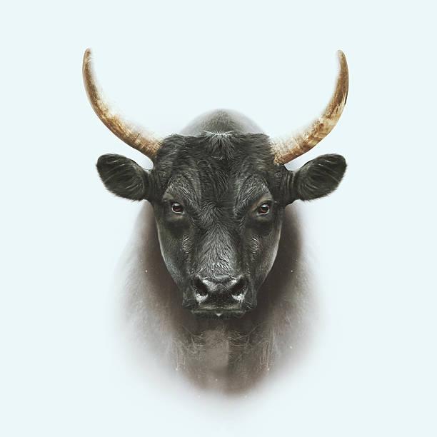 soñar con toros amarrados
