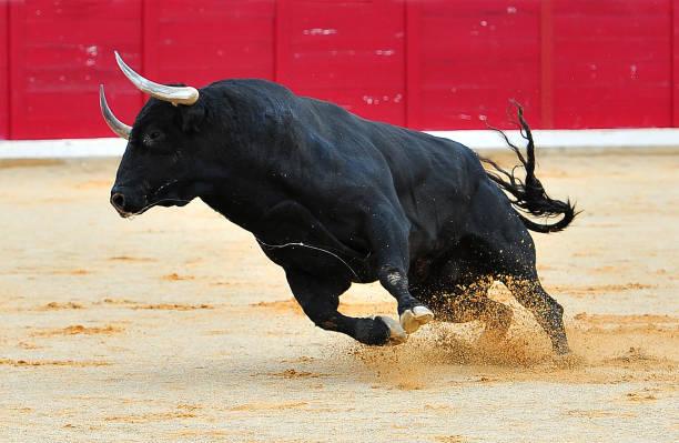 soñar con toros corriendo
